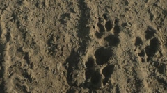 Dog Paw Prints 1 Medshot Stock Footage