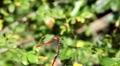 The dragonfly sits down and flies up from a branch HD Footage