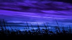 Harvest Maize Blue-Violet Loop Stock Footage