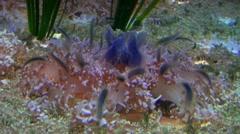 Jellyfish 20111003-091604 Stock Footage