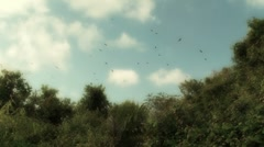 Vultures Circling Above Stock Footage