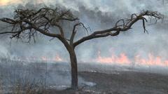 Bushfire Stock Footage