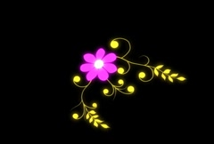 Flower NTSC - stock footage