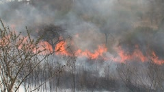 Bushfire wide view of forest Stock Footage