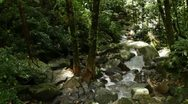 Rocky Jungle Stream Stock Footage