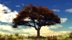 Autumn tree on sunny hill. Stock Footage