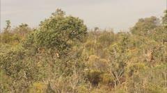 Wildlife. Castilla 4 Stock Footage