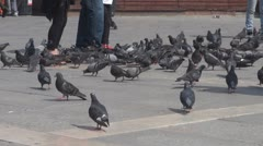 People with pigeons in Piazza San Marco in Venice, Italy Stock Footage