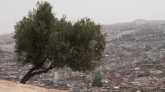 Fes, Morocco hillside tree Stock Footage