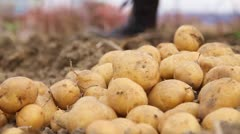 Potatoes Stock Footage