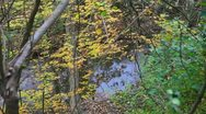 Stock Video Footage of Colorful fall forest with stream