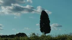 Mediterranean cypress - stock footage
