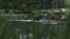 Bird hunting on the Lake Stock Footage
