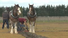 Clydesdale horses at work in a field Stock Footage