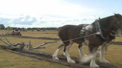 Clydesdale horse team Stock Footage
