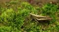 Macro Grasshopper Exploring the Beautiful Nature HD Footage