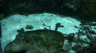 Underwater Ocean Tropical Reef 11 Olive Ridley Sea Turtle Stock Footage