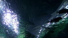Shark Tunnel 20111003-100931 Stock Footage