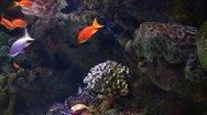 Underwater Ocean Tropical Reef 20 Tropical Fish Stock Footage