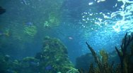 Stock Video Footage of Underwater Ocean Tropical Reef 21 Yellowtailed Fusilier Fish