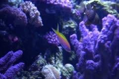 Underwater Ocean Tropical Reef 25 Tropical Fish - stock footage