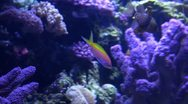 Stock Video Footage of Underwater Ocean Tropical Reef 25 Tropical Fish