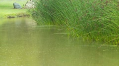 Rain falling on reeds and the river bank Stock Footage