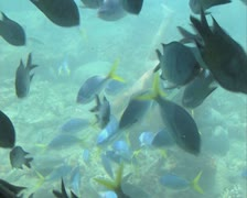 Shoal of fish and diver seen through glass bottomed boat Stock Footage