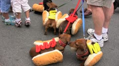 Hot dogs & skunk dog Stock Footage