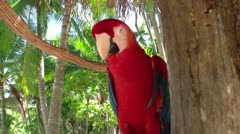 Red parrot 2 Stock Footage