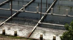 Trout Farm 2 Stock Footage