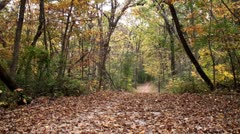 Gravel trail path covered in fallen leaves Stock Footage