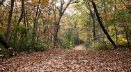 Stock Video Footage of Gravel trail path covered in fallen leaves
