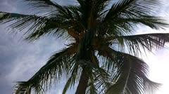 Coconut Palm Tree 01 - stock footage