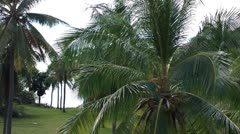 Coconut Palm Trees 03 Stock Footage