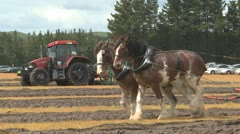 Clydesdale horses and tractors plowing a field Stock Footage