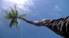 Vertical palmtree bluesky, seamless-loop Stock Footage