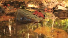 Close up of leaves and rocks in a stream Stock Footage