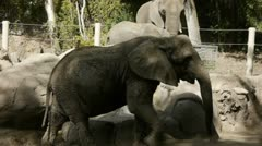 Elephant herd Stock Footage