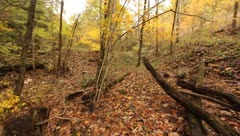 Discarded rubber tire in the woods Stock Footage