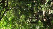 Vertical tropical garden, seamless looping Stock Footage