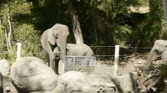 Elephant eating Stock Footage