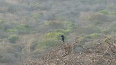 Bird south-africa Stock Footage