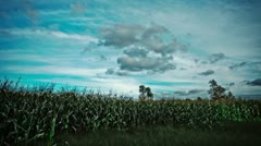 Cloud Movements Time lapse in a Corn Field - stock footage