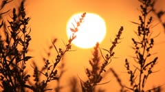 Red misty morning sun - stock footage