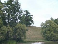 Moving away from oak on lake shore filmed aboard motor boat. Stock Footage