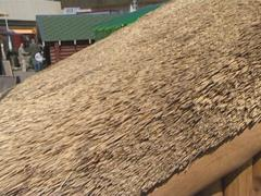 Roof of the house made of straw. Exposure. Stock Footage