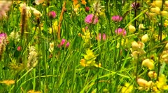 Beautiful flowers and grass on mountain meadows Stock Footage