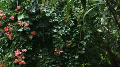 Rain, Raining, Tropical Rain, Beautiful Nature, Flowers, House Stock Footage