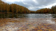 Yellow autumn leaves float at surface of pond Stock Footage